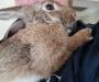 Found Rabbit