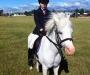 Registered Welsh pony