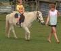 Gorgeous Welsh pony
